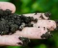 Initiation au jardinage biologique et à la permaculture