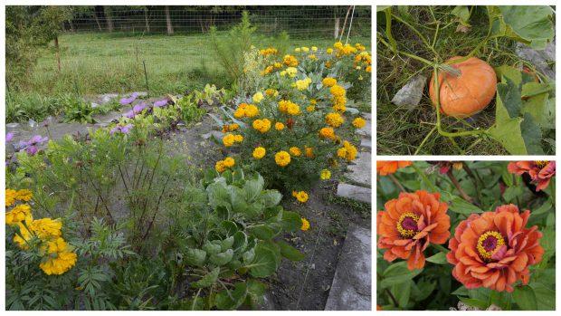 Jardiner sans se planter – Initiation au jardinage biologique et à la permaculture – saison 2018