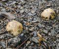 Biodiversité : les trésors d'un terril