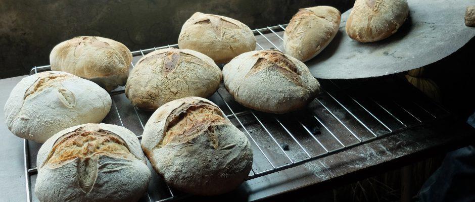 Four à pains