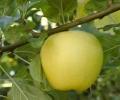 Permaculture : jardiner sans poison