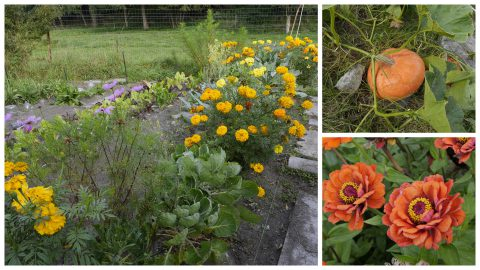 Jardins Ou'Vers le 24-09-16