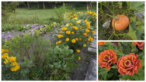 Jardiner bio sans se planter