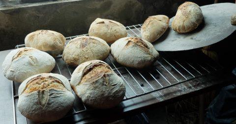 Atelier de pains, pizzas et focaccia