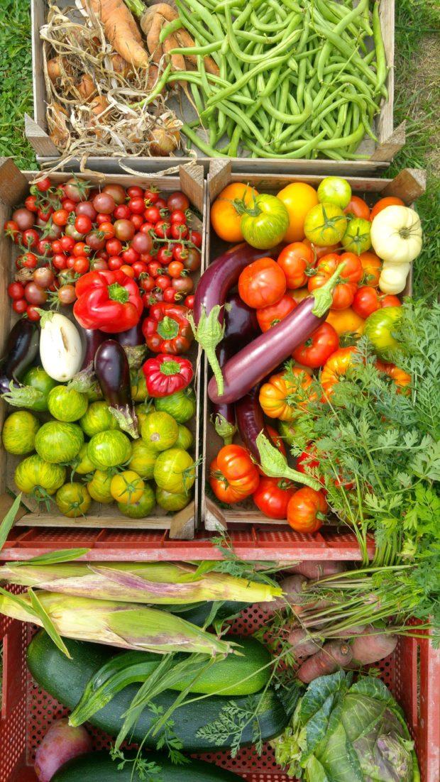 Jardiner sans se planter! Initiation au jardinage biologique et à la permaculture