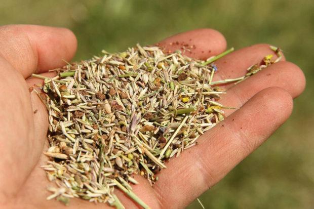 Les semences et la perte de biodiversité : nous sommes tous interpellés !