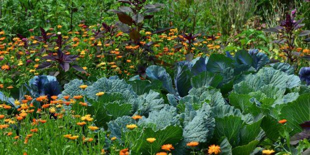 """Visite d'un potager sur le thème """"le jardin nourricier en permaculture"""""""