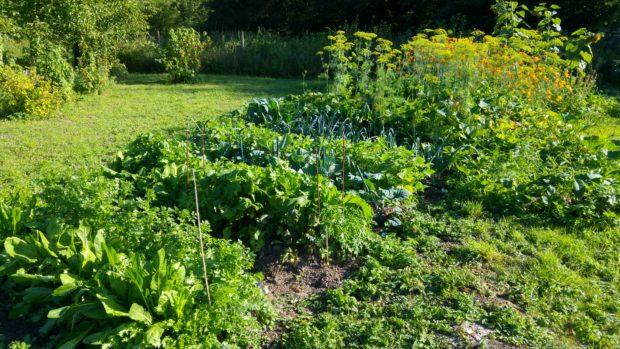 Jardinage et permaculture à Dour + terrain gratuit pour cultiver