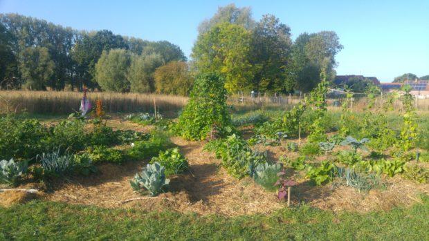 Formation en Permaculture – les jardins de l'Oasis à Dour – Saison 2021